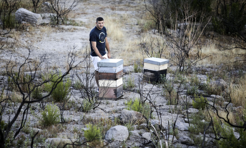 João Dimas perdeu mais de 370 colónias de colmeias. Por ano, produz entre 15 a 20 toneladas de mel. No ano passado, não ultrapassou os quatro mil quilos.