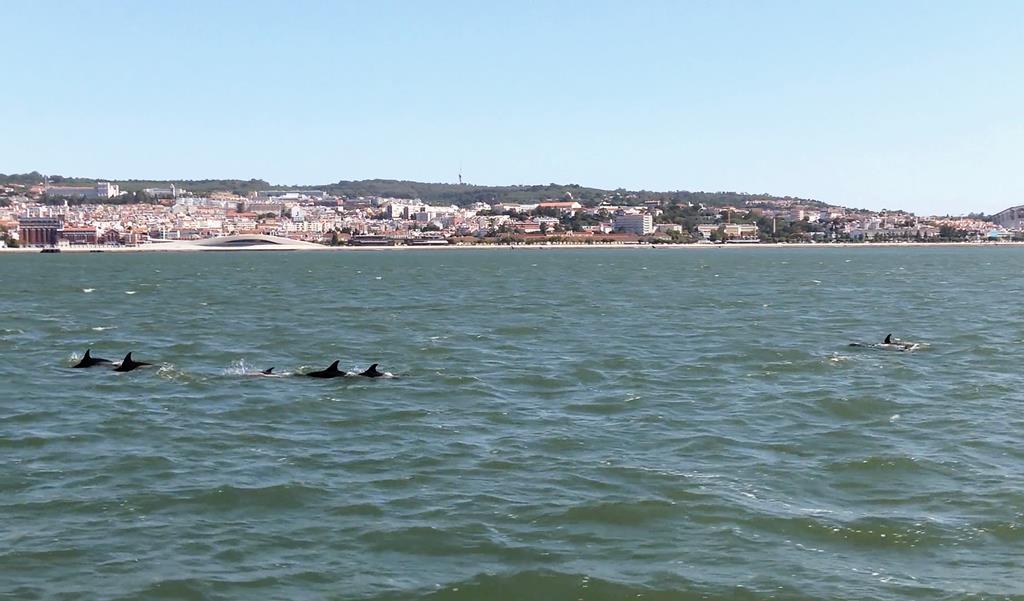 Os golfinhos voltaram o Tejo durante o confinamento. Foto: Câmara Municipal de Lisboa