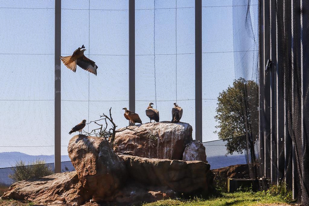 Centro de recuperação de aves do Baixo Sabor Foto: Francisco Pinto/Lusa
