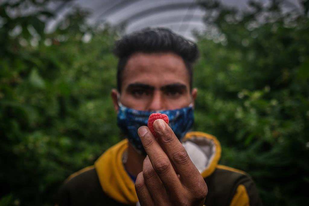 """Trabalhadores imigrantes em Odemira vivem um surto de Covid e estavam albergados em condições """"degradantes"""". Foto: Mário Cruz/Lusa"""