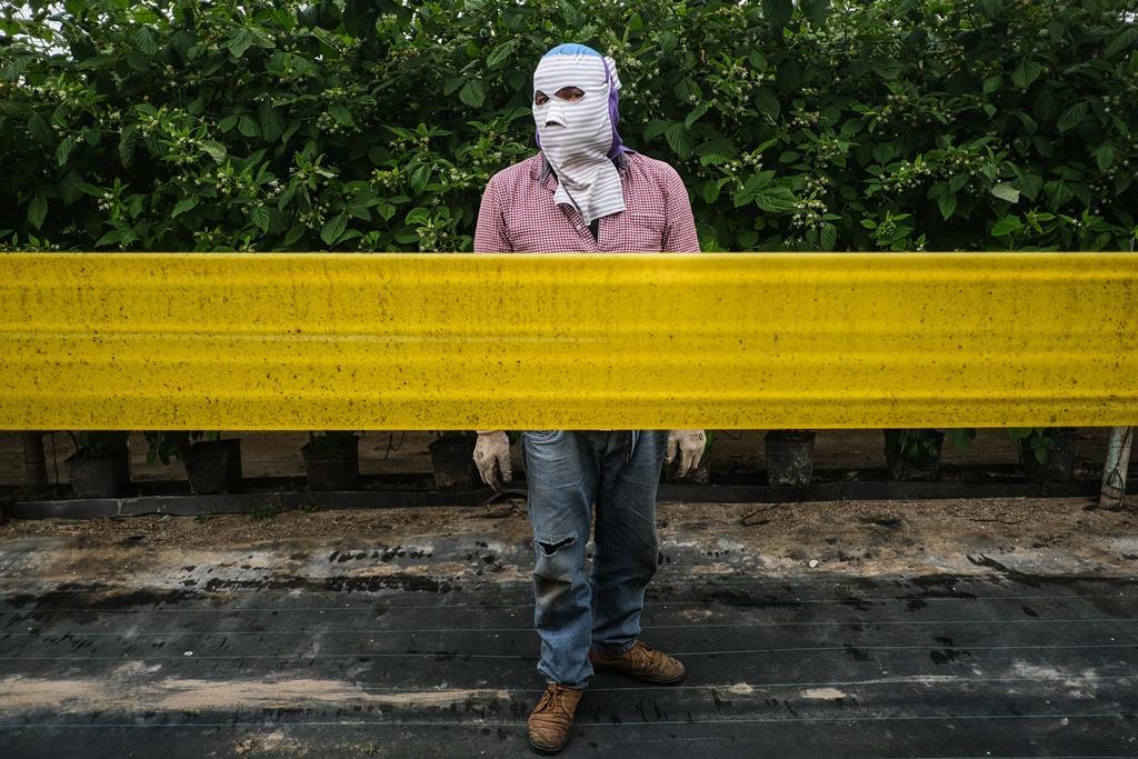 Situação dos trabalhadores sazonais em Odemira é uma vergonha, considera Rui Rio. Foto: Mário Cruz/Lusa