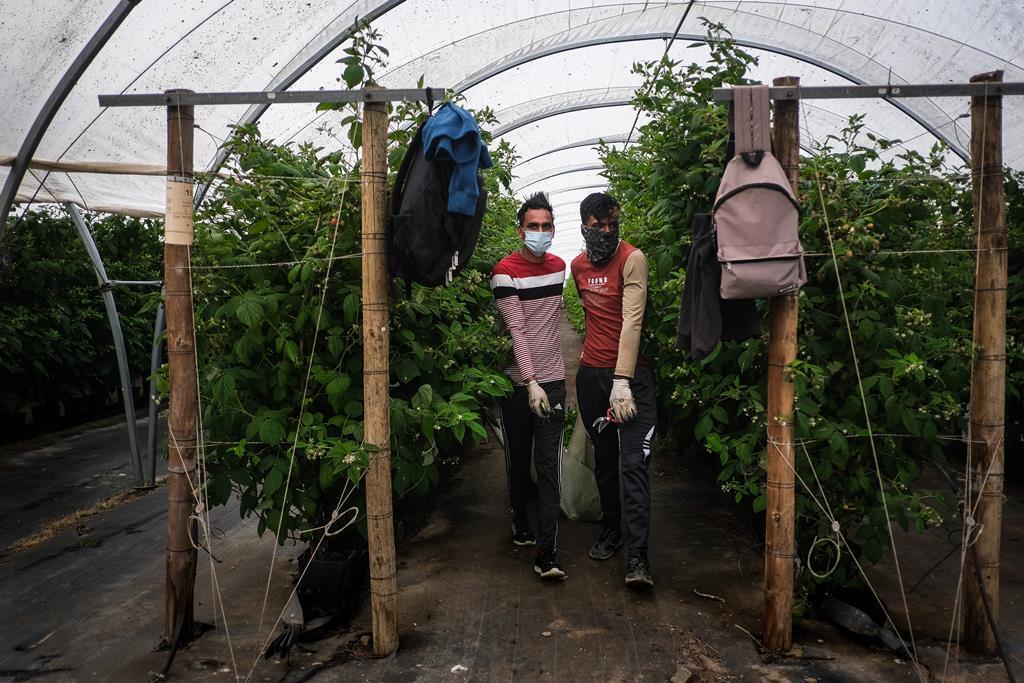 Contentores podem ser solução para os imigrantes, considera o Governo. Foto: Mário Cruz/Lusa