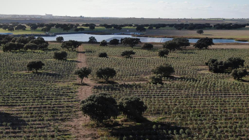 O Alqueva mudou a paisagem e provocou uma revolução agrária, mas falta mão-de-obra. Foto: EDIA