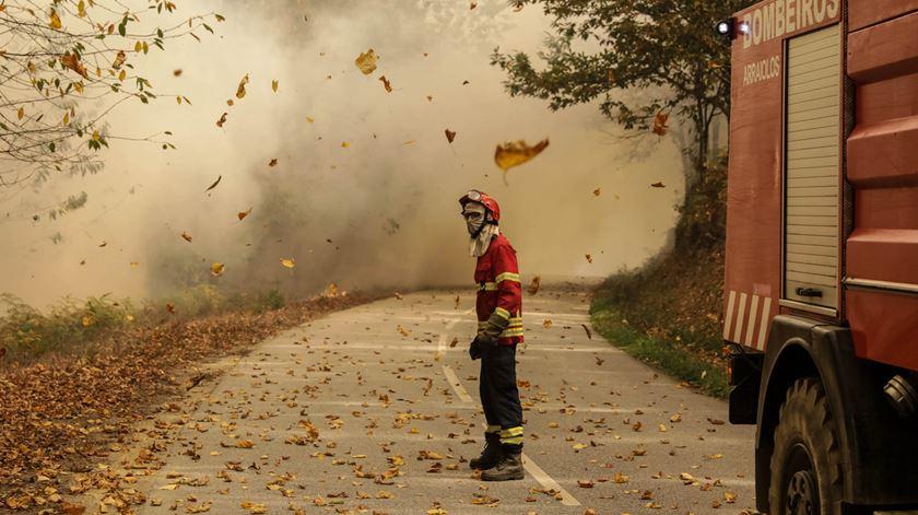 No Outono as folhas caem, em chamas. Foto: Paulo Novais/Lusa