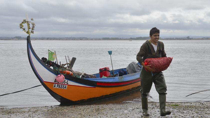 Pandemia de Covid-19 afeta ganha-pão de mariscadores em Aveiro. Foto: DR
