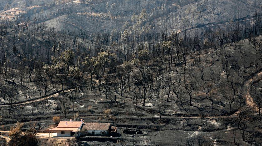 Incêndios florestais têm sido particularmente graves nos últimos anos. Foto: Filipe Farinha/Lusa