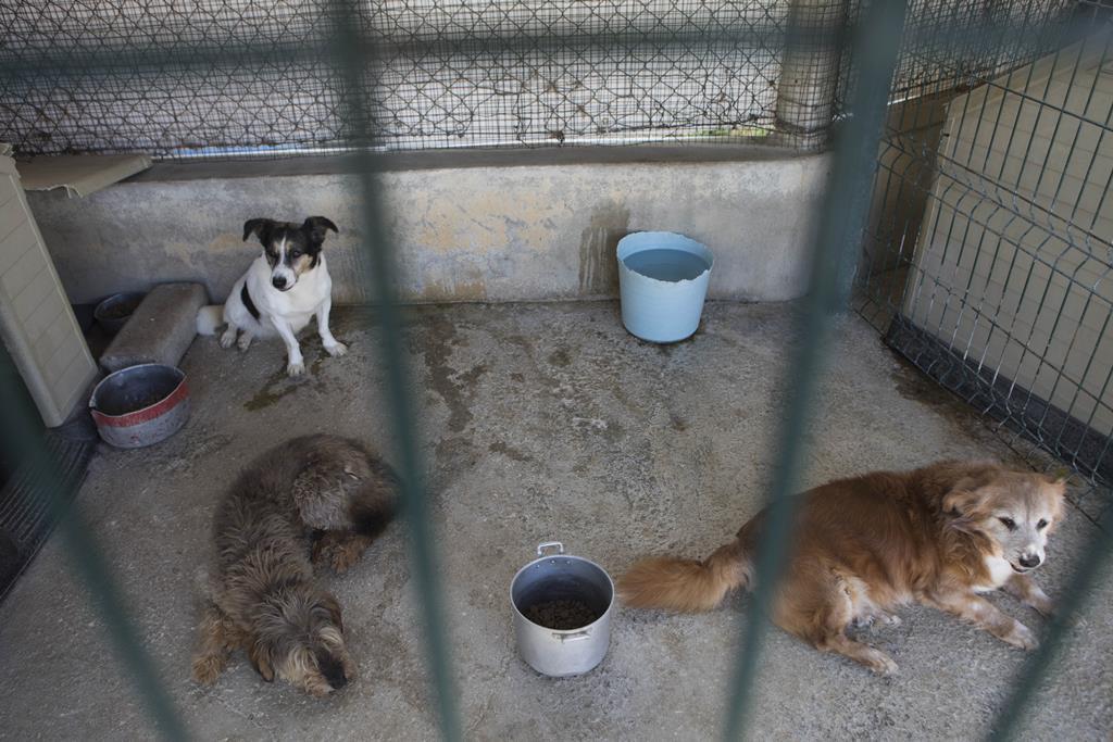 Os animais ficaram abandonados durante vários dias. Foto: Paulo Cunha/Lusa [Arquivo]