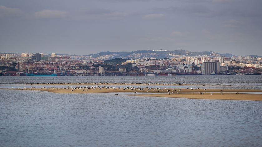 Terrenos do novo aeroporto do Montijo Foto: Mário Cruz/Lusa