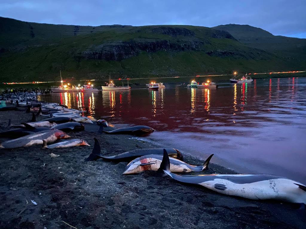 Foto: Facebook da Sea Sheperd