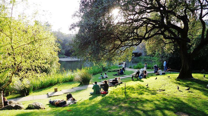 Da vasta obra de Ribeiro Telles destaca-se o projeto dos jardins da Gulbenkian, em Lisboa Foto: João Pimentel Ferreira/Wikimedia