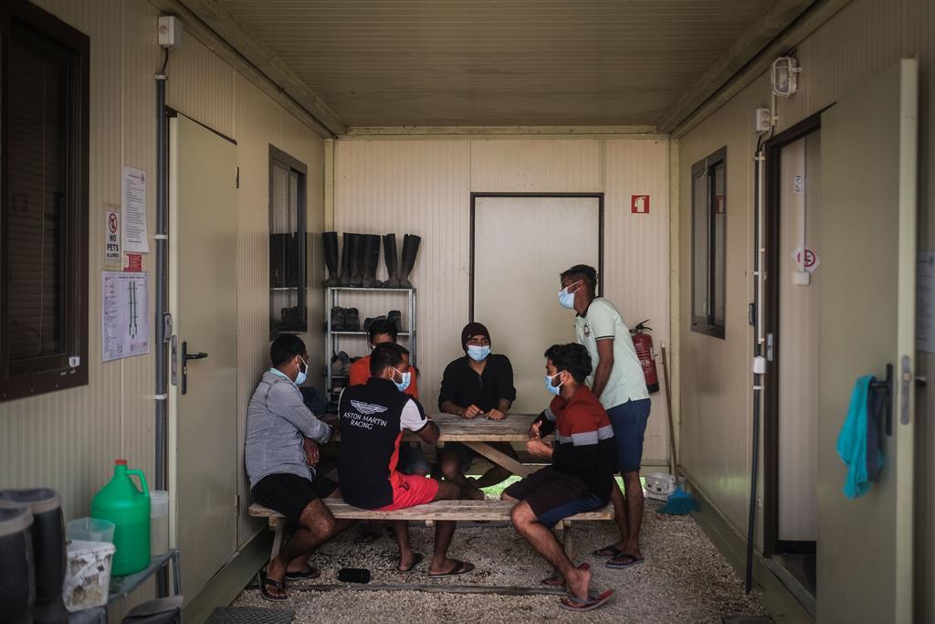 Trabalhadores indianos numa empresa agrícola, em Odemira. Foto: Mário Cruz/Lusa