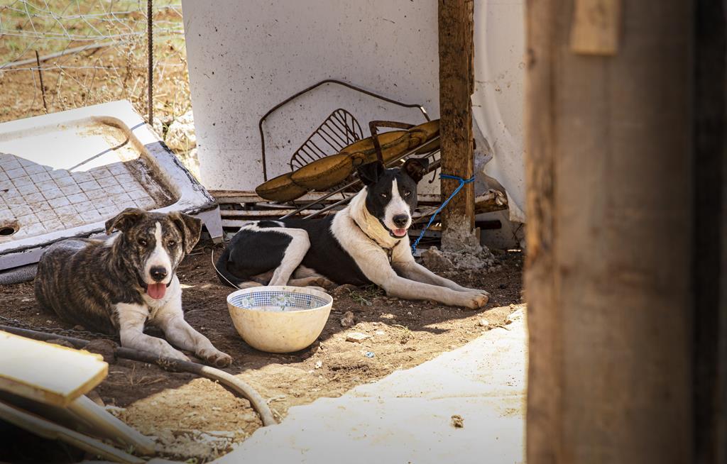 Dois cães vigiam a entrada da casa.