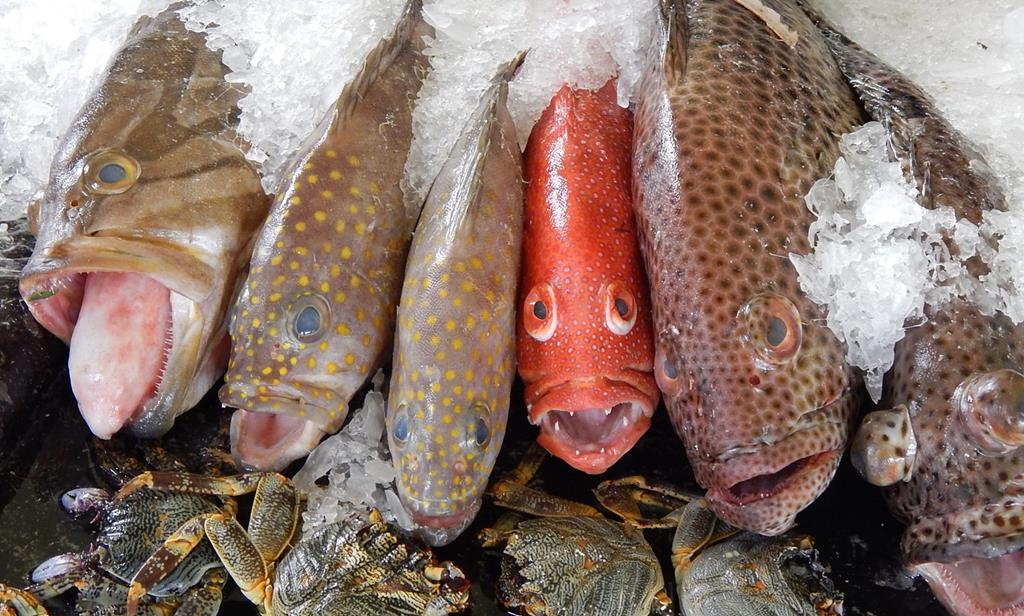 Peixes dos corais do Tonga em exibição da Feira Agrícola Real. O Tonga é dos poucos países que não teve um único caso de coronavírus. Foto: Mary Lyn Fonua