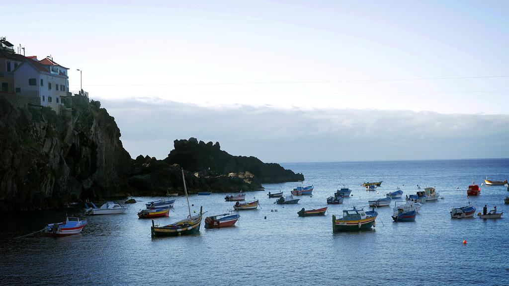 Madeira com poucos novos casos diários. Foto: DR