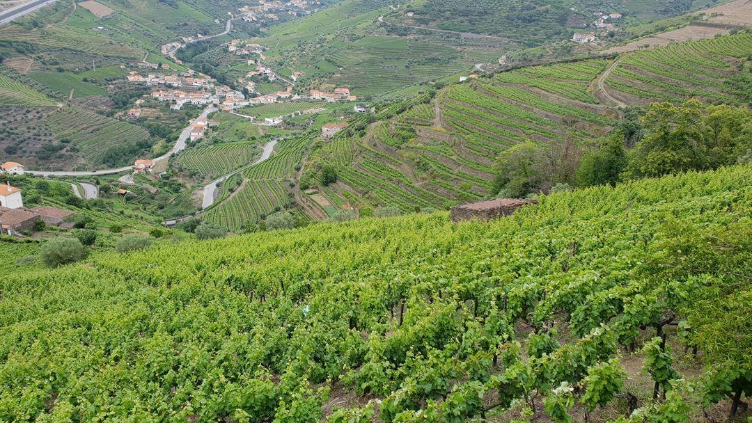 """Os empresários do Douro temem que os ingleses substituam os vinhos da região pelos vinhos do """"Novo Mundo"""". Foto: Olímpia Mairos/RR"""